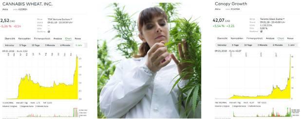 marihuana aktien kanada usa