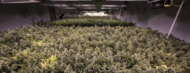 Canopy Growth Kursziel
